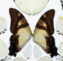 Las mariposas clavadas con chinchetas son recurrentes en la producción del creador/ Photo Credits: Damien Hirst